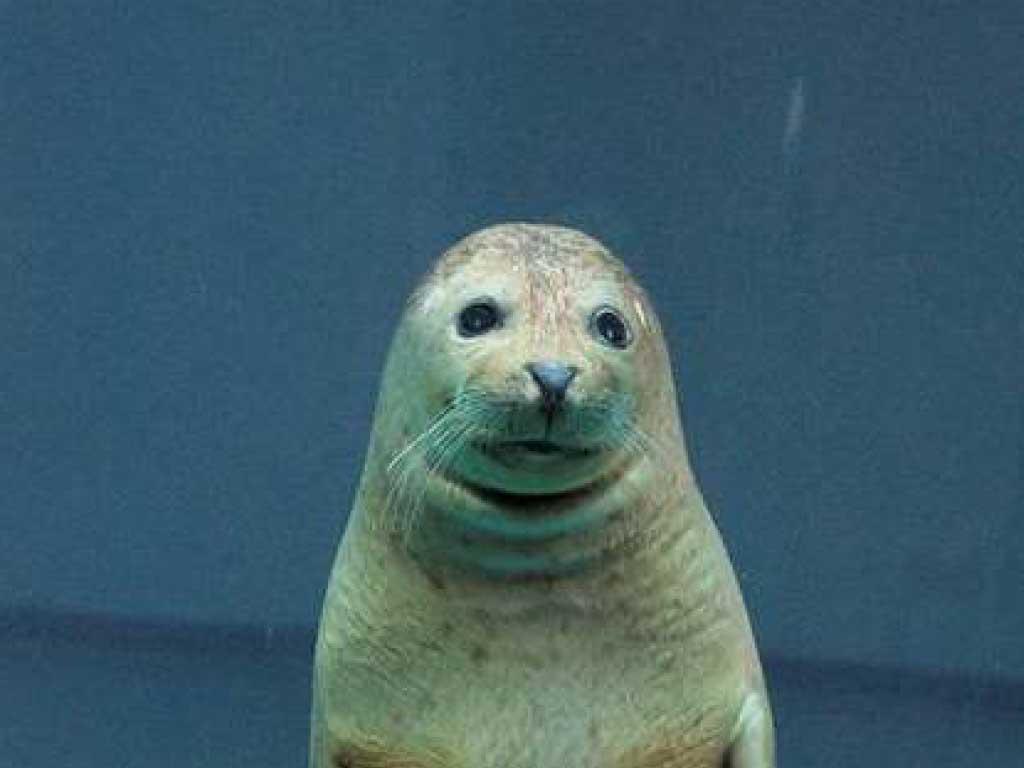 【訃報】日本平動物園のリーダー「ソラさま」がお亡くなりになりました